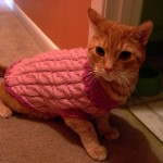 BuzzFeed_Cats_in_Sweaters_JESS3